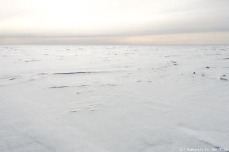 Que restera-t-il de cette expédition ? 2.045 kilomètres parcourus à travers l'Antarctique en 74 jours, en passant par le pôle Sud. L'expédition en ski sans voile de traction la plus longue réalisée par une femme en Antarctique. La traversée en ski sans voile de traction la plus longue du continent. La première traversée par un couple... Les chiffres ont pour nous peu d'importance, les records aussi. Ils seront, nous l'espérons, rapidement améliorés, par d'autres aventuriers qui iront en Antarctique réaliser leurs rêves. Ce qui nous a portés durant toute l'expédition, et ce qui compte le plus pour nous, ce sont les liens que nous avons noués avec toutes les personnes qui nous ont soutenus avant et pendant l'expédition, toutes ces belles rencontres autour de ce projet qui ont donné du sens à chacun des kilomètres parcourus.